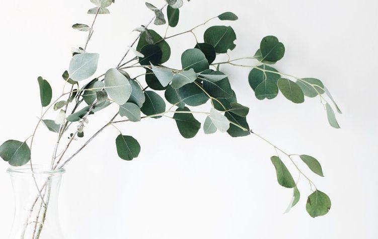 ガラスと枝葉